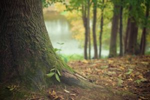20150306_benefiel_autumn_forest