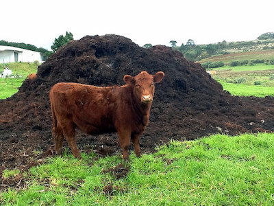 20160630_cow_manure