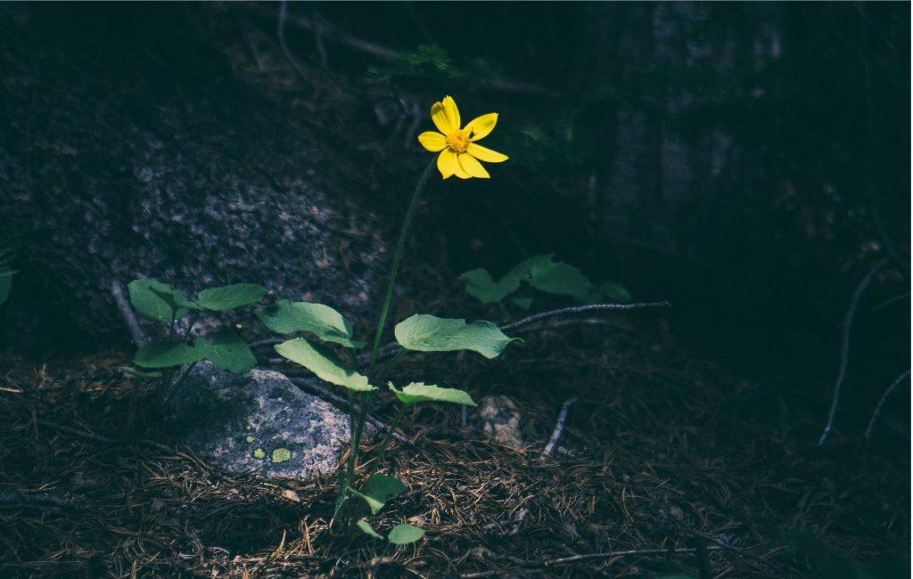 Practicing Gratitude as Healing
